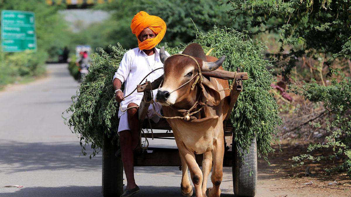 Ahead of kharif season, Maharashtra govt waives interest on crop loan up to Rs 3 lakh