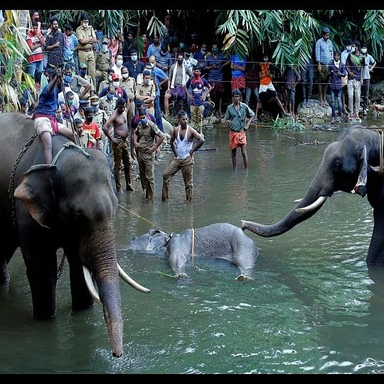 Kerala Elephant Death: State Forest Minister says one arrested, probe still on
