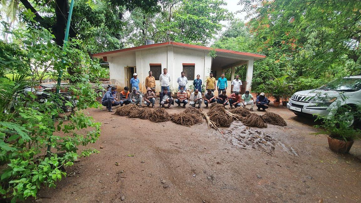 Satara: Forest department busted wildlife crime racket