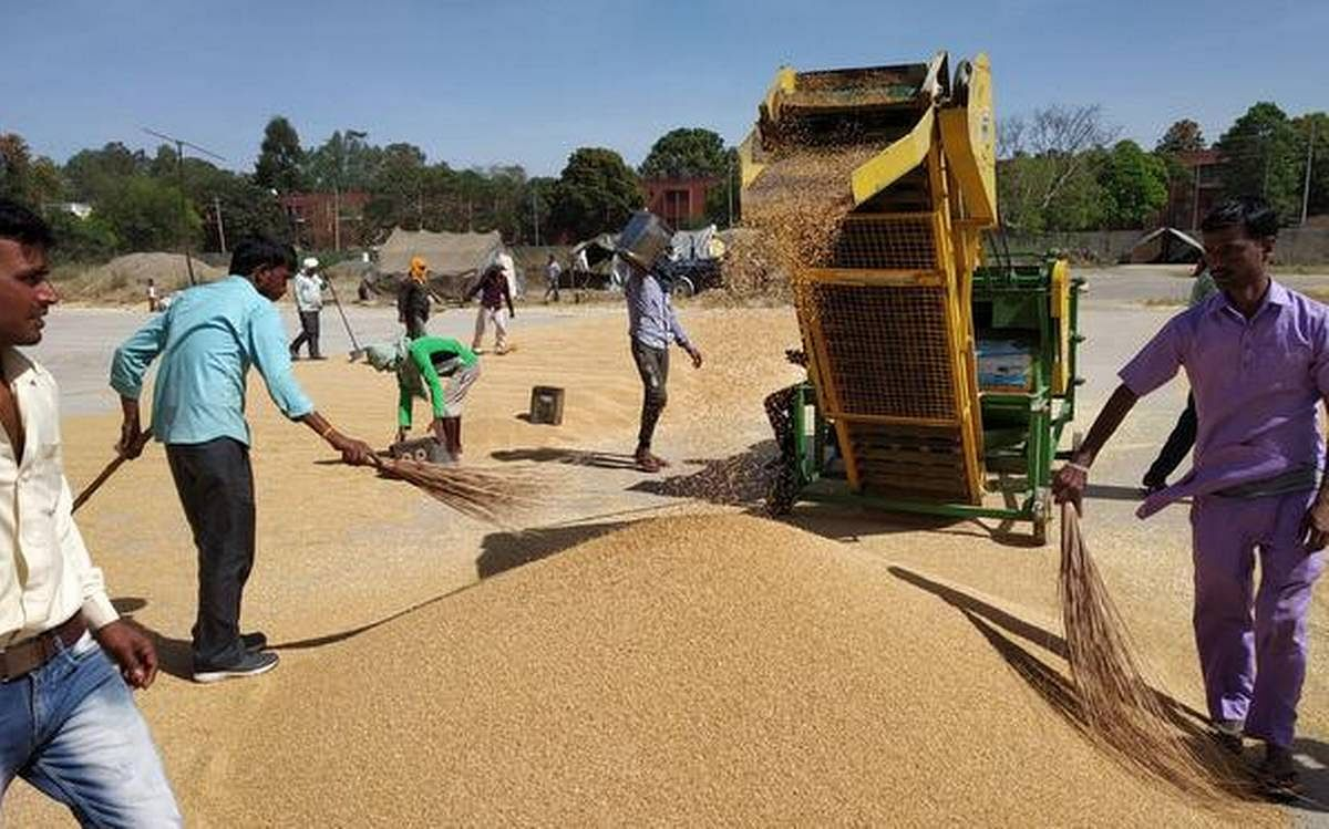 Madhya Pradesh: 20 Lakh people on wheat purchase duty keep corona at bay