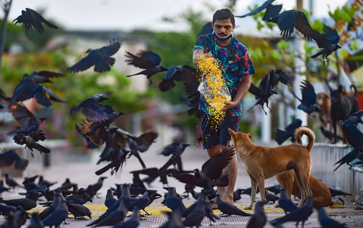 Representative pic/ Death of dozen birds in Thane sparks fear, samples of carcasses found negative for avian flu