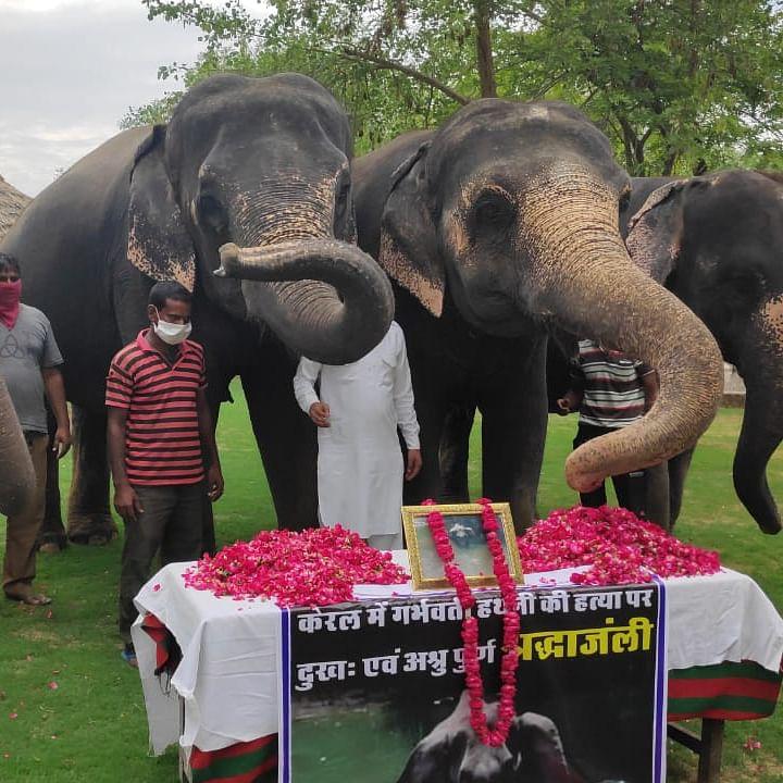 Kerala Elephant death: Jaipur elephants and mahouts pay tribute near Amber Fort