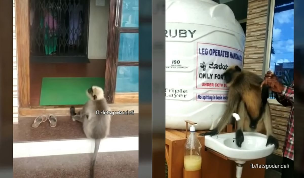 Watch: Wounded monkey gets treated at Karnataka hospital