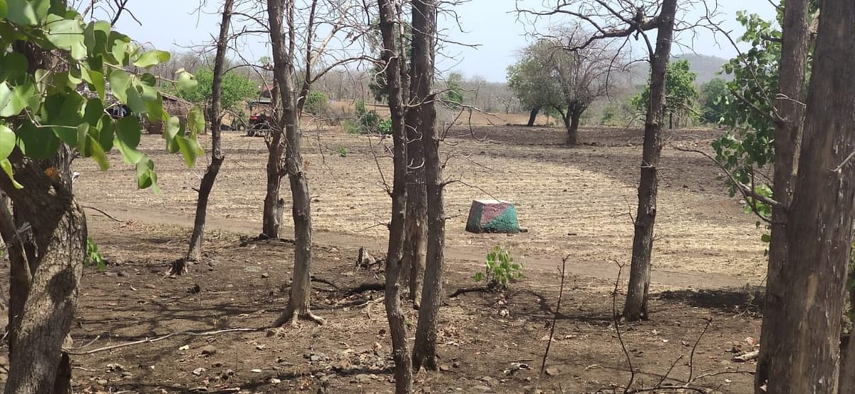 Madhya Pradesh: Farmers encroached forest land for farming during lockdown