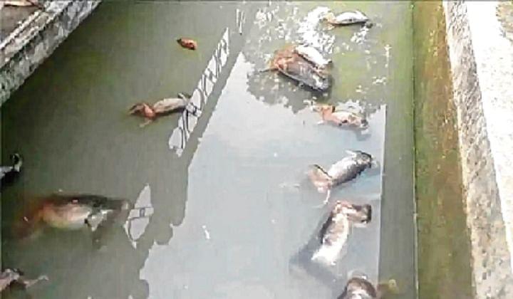 Meat bomb kills jackal, 12 arrested in Tamil Nadu