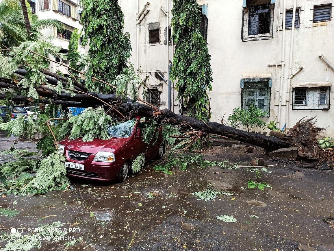 Cyclone Nisarga: Gusty winds uproot 13 trees, damage car in Bhayandar