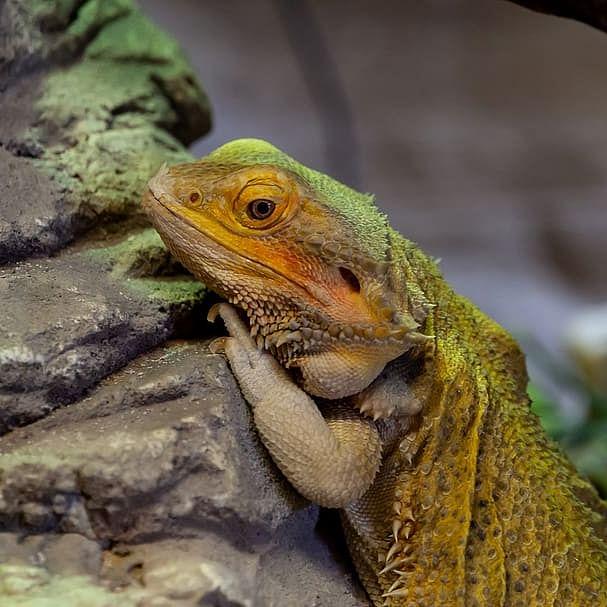 Maharashtra CM's son Tejas Thackeray, team discover new lizard species
