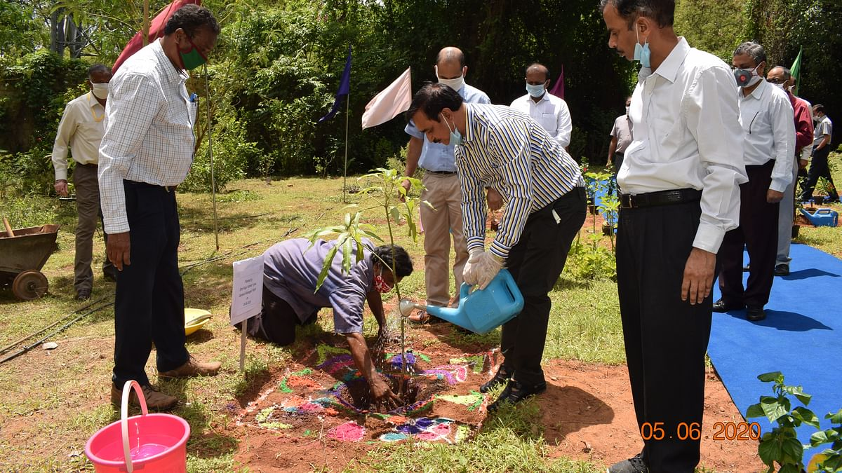 RWF observes World Environment Day 2020