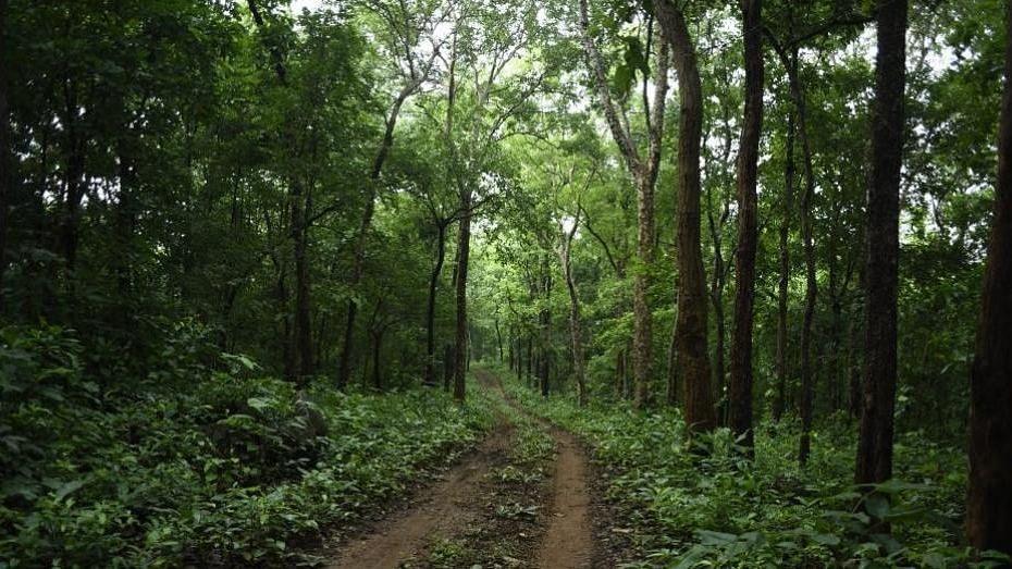 Maha Govt announces Tillari as Conservation Reserve