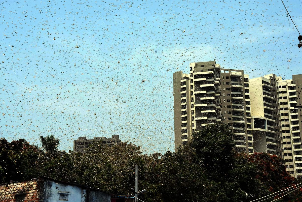 Bhopal: Residents mistake swarm of locusts for monsoon cloud