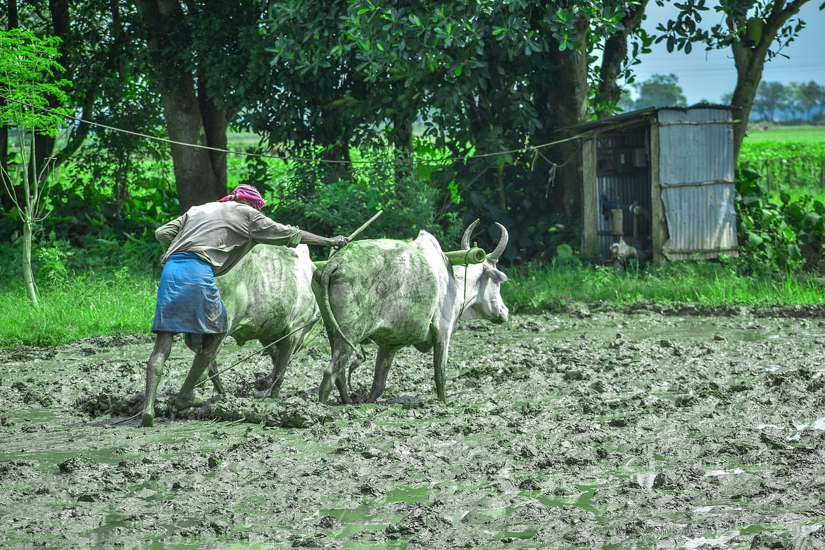 SIES-FPJ webinar: Agriculture is important for India, but it needs to change