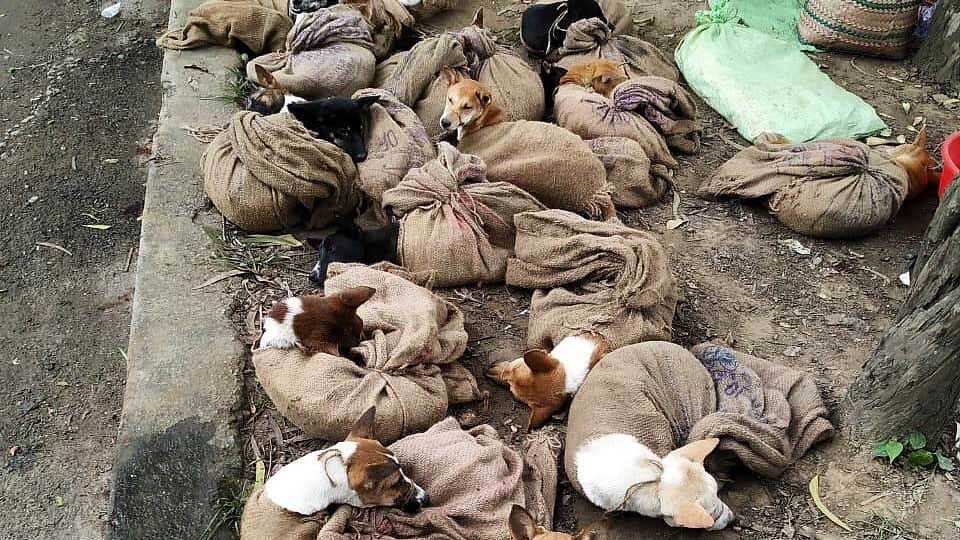Nagaland bans sale of dog meat after picture of dogs tied in sacks go viral