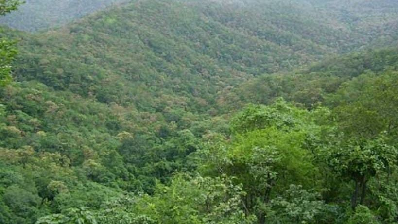 Melghat Reserved Forest Area (File Photo)