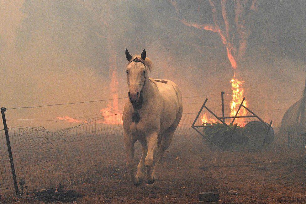 3 billion innocent animals killed, displaced by Australian bushfires