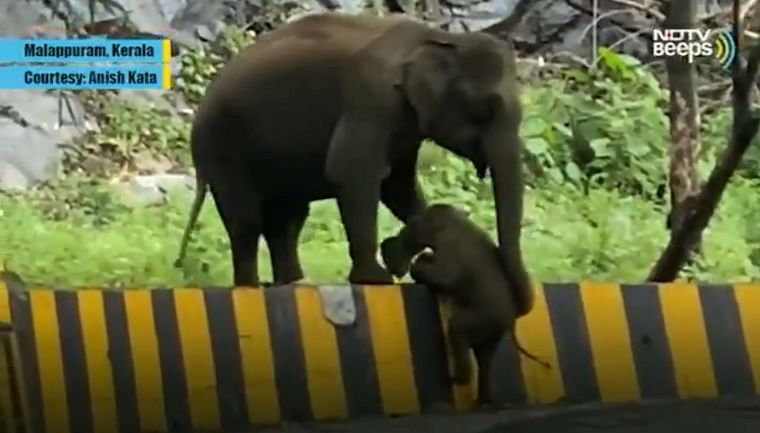 Forest officer slams NDTV for calling a 'struggling' elephant's video 'heartwarming'