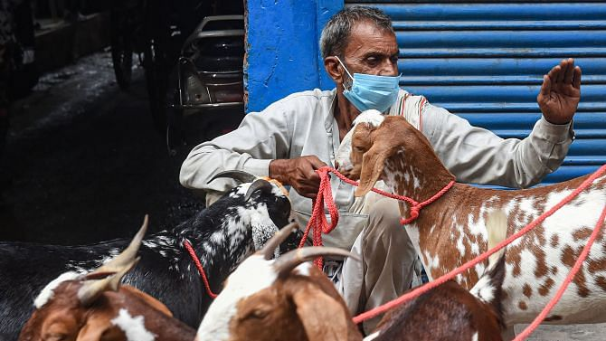 Corona Slaughter: Goat sellers 90% stock lies unsold due to lockdown in Bhopal