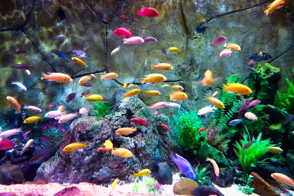 Maha govt mulls development of chain of aquariums in Pune, Nagpur, and Aurangabad