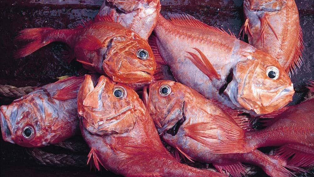 Study reveals popular seafood species in sharp decline around the world