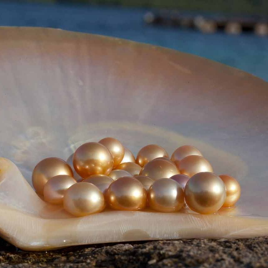 Pearl farming begins in Chhindwara; Chandangaon picked for pilot project in MP