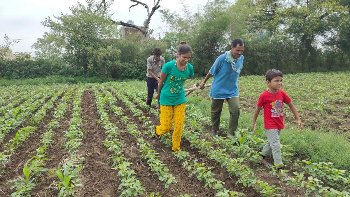 Madhya Pradesh: Tilling 5 bighas a tale of umpteen woes & gumption in Mandsaur