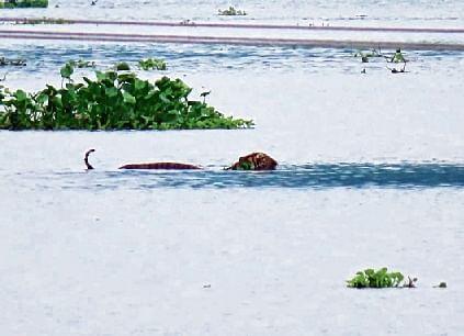 Kaziranga Park 95% flooded, task on to keep animals afloat