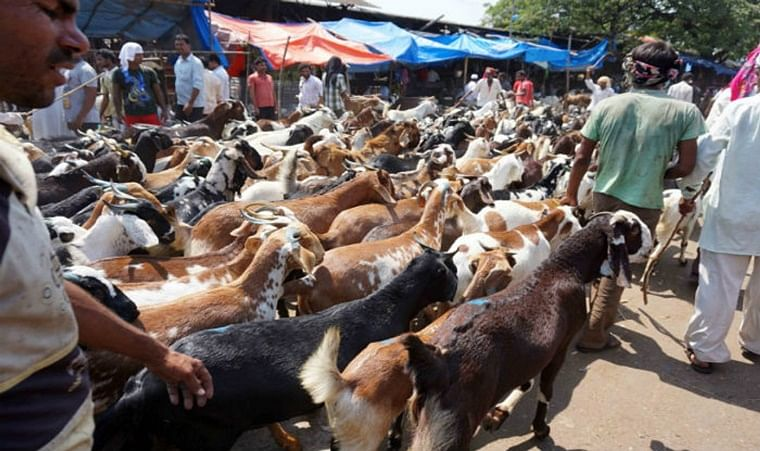 Bakri Eid 2020: 35 trucks full of goats and chickens worth Rs 10 crore stopped at Maharashtra-Gujarat border, says report