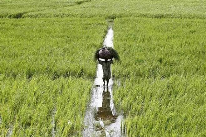Maharashtra Cabinet gives nod to new rules to promote agri firms