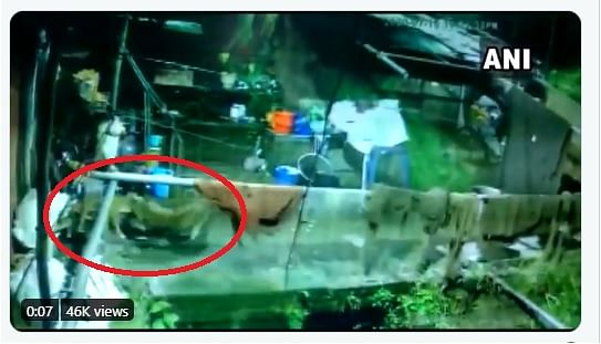 Watch: Watch: Leopard enters house in Uttarakhand, attacks a dog and takes it away