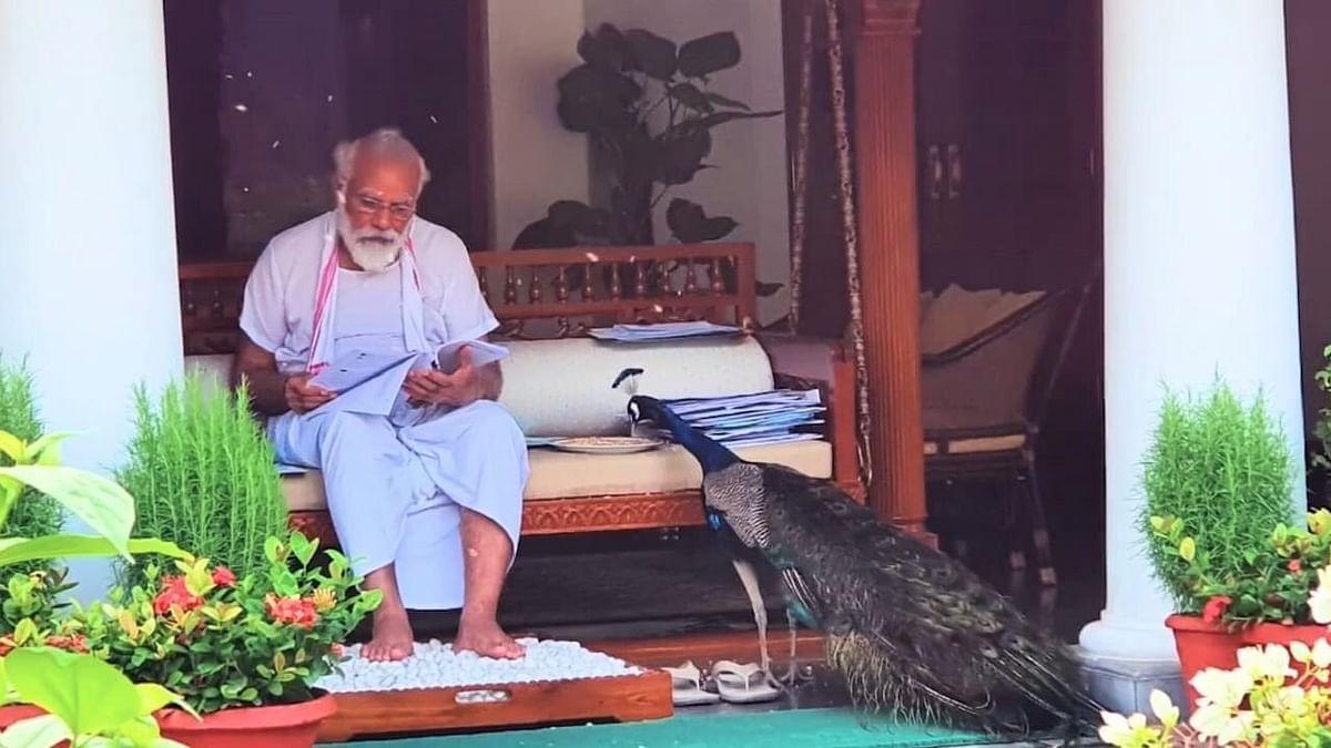 PM Modi shares video of him feeding peacock in his yard; netizens call it 'animal communalism'