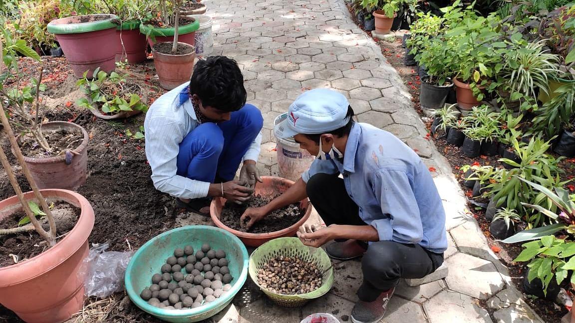Institute is preparing seed balls