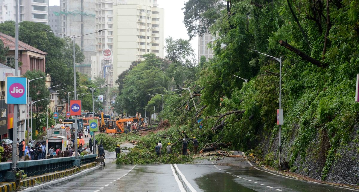The BMC is trying to remove around 40-50 trees that fell after a part of the retaining wall at BG Kher Road (Ridge Road) collapsed and blocked the flow of traffic/ Representative Pic