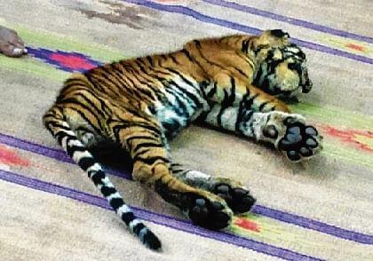 Jungle Raj: Mukundara Hills Reserve cub dies