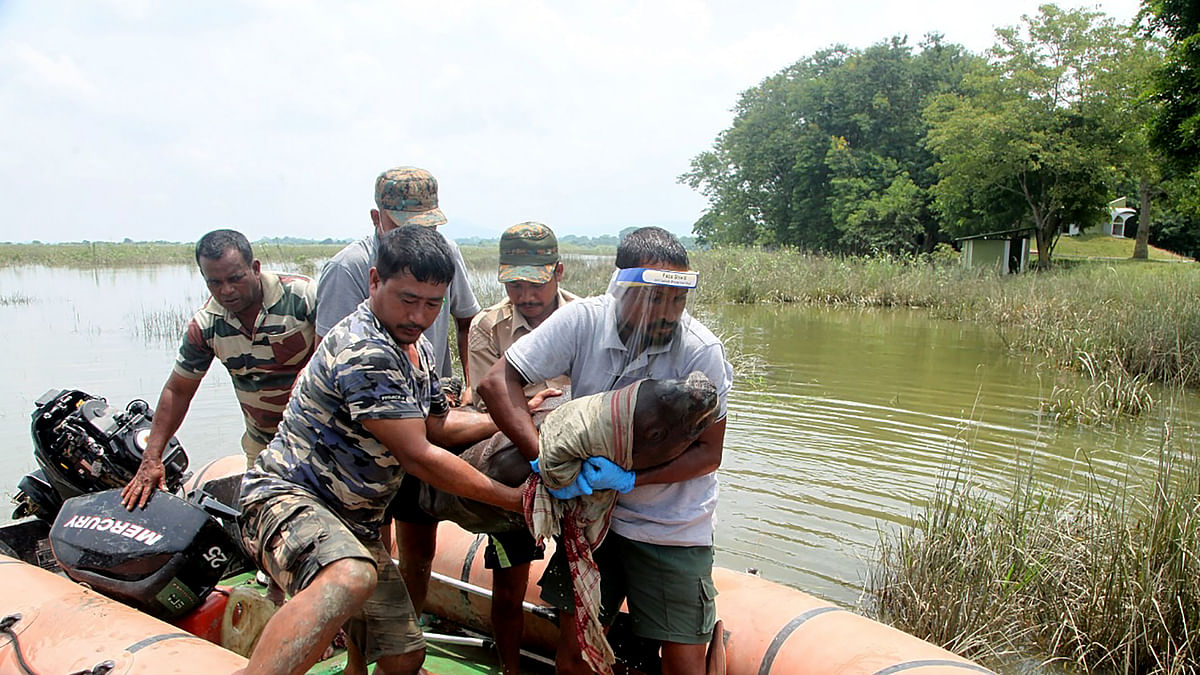 Assam floods: 3-4 days old Rhino calf rescued in Kaziranga National Park