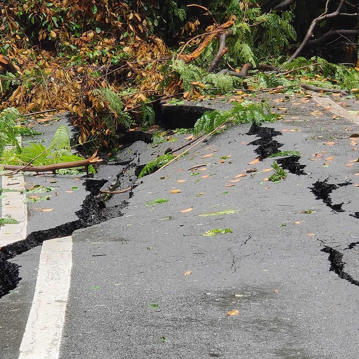 Nullah City: Road crack and trees fall like ninepins