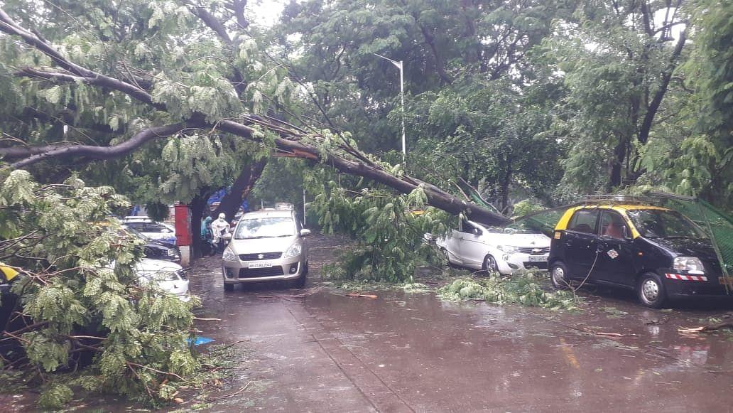 Tree collapses near Mahalaxmi racecourse