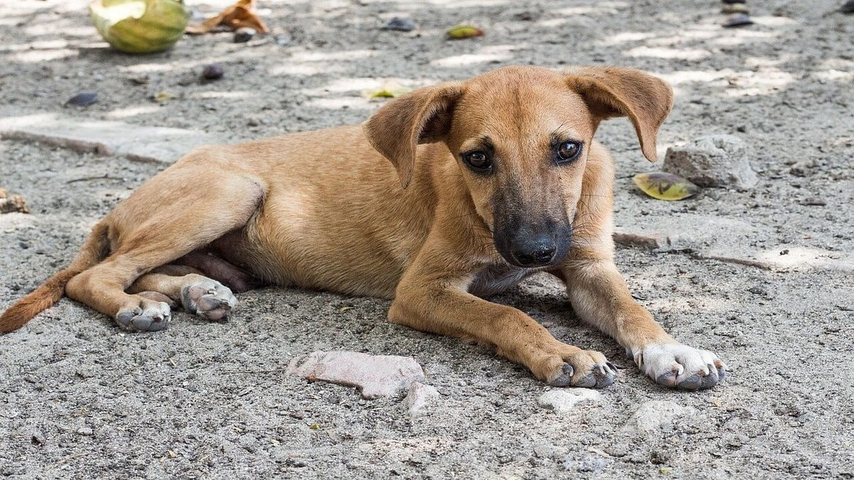 Humanity in times of crisis: Youth organisation rescues stray animals; aims to create awareness among people