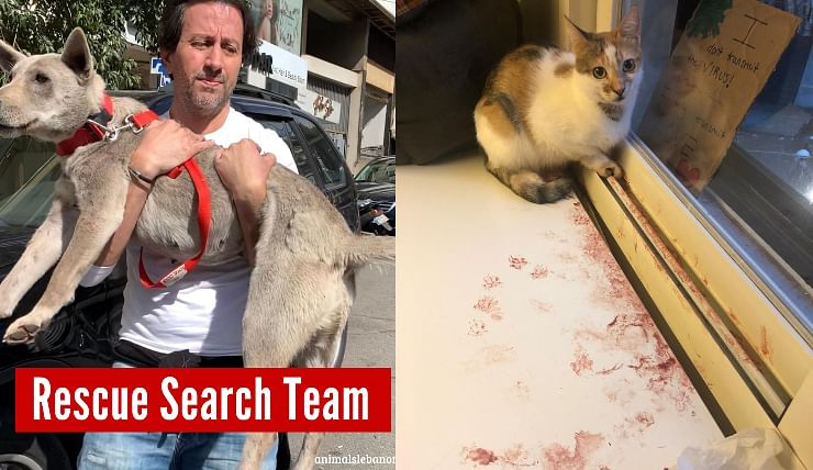 Heartwarming! Animal rights group helps Beirut man reunite with dog post blast; Internet showers love