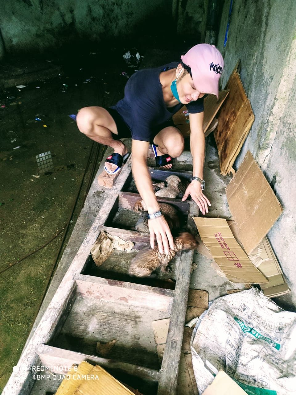 Humanity in times of crisis: Watchman saves 10 adorable puppies amid heavy rains in Thane