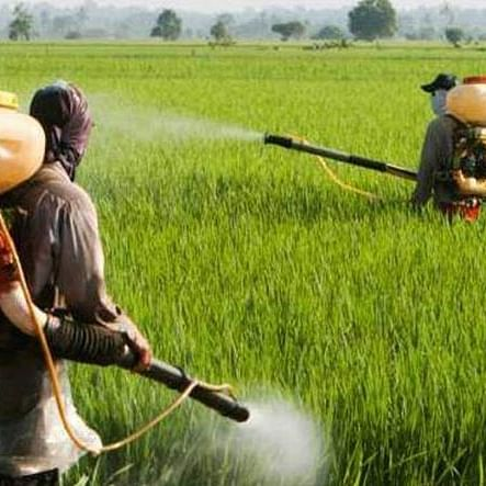 Swadeshi Jagran Manch bats for ban on glyphosate agriculture