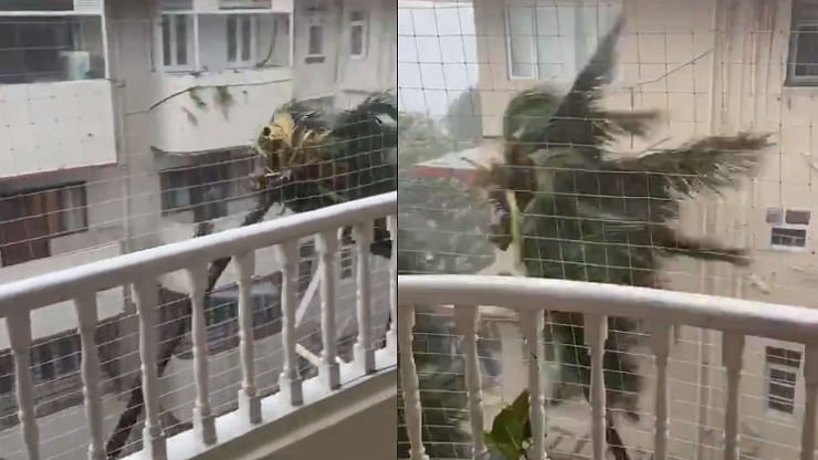 Watch: Anand Mahindra shares 'palm tree's Tandava' as heavy rains lash Mumbai