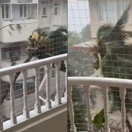 Watch: Anand Mahindra shares 'palm tree's Tandava' as heavy rains lash Mumbai