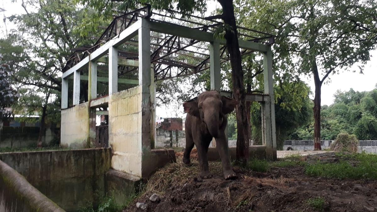 Elephant Moti at city zoo as seen on Thursday