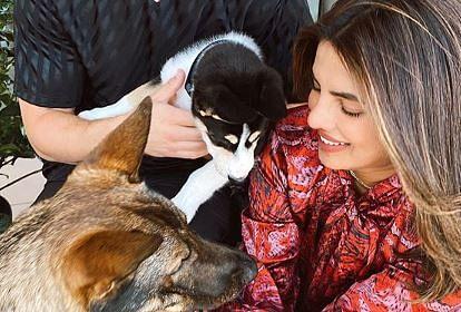 Priyanka Chopra welcomes new furry friend, shares family portrait