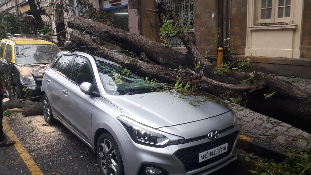 Tree falls on car at Princess street near Marine Lines