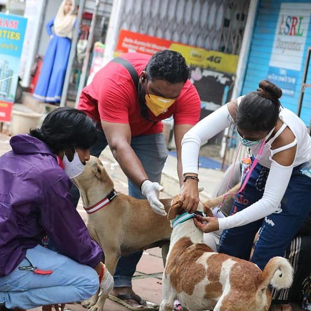 Stray Animals in Mira-Bhayandar Get Radium Belts on Independence Day 2020