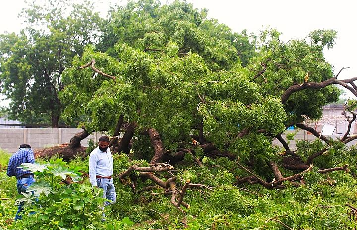 Madhya Pradesh: Administration looks away as 7 trees chopped off in Dhar