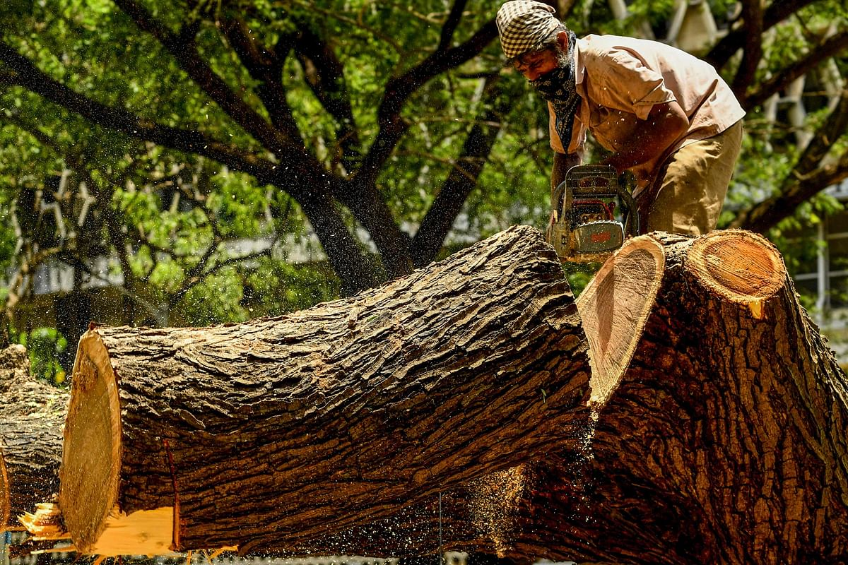 Navi Mumbai: NMMC lodges FIR for felling trees using fake authorisation