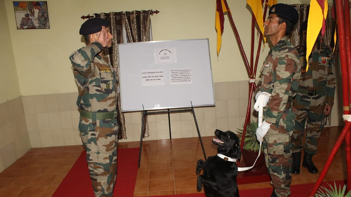 Who are Sophie and Vida? Meet Indian Army dog heroes mentioned by PM Modi during 'Mann ki Baat'