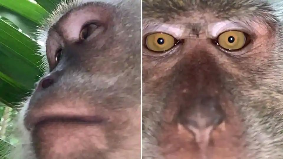Monkey steals phone & clicks selfies