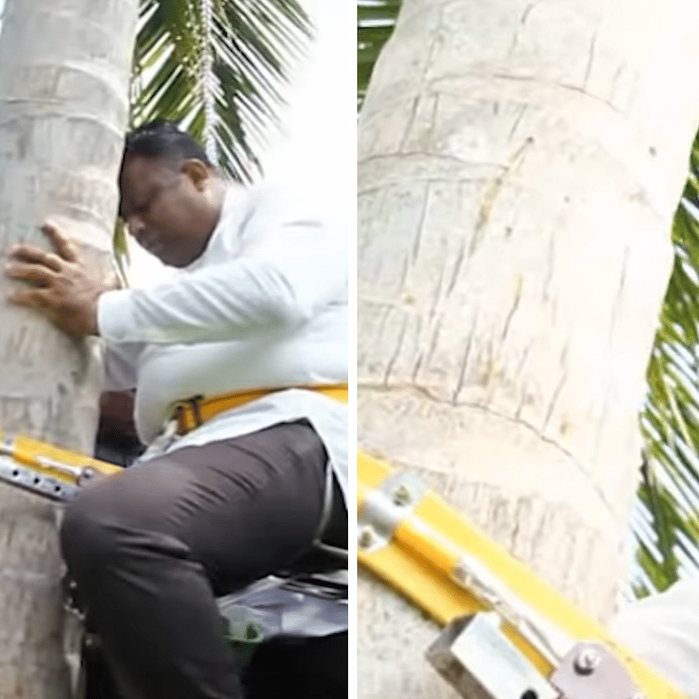 Reaching new heights: Sri Lanka's Coconut Minister climbs tree for press conference